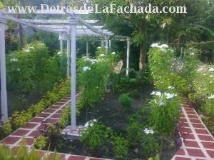 Jardín del patio