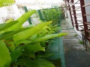 Jardines laterales